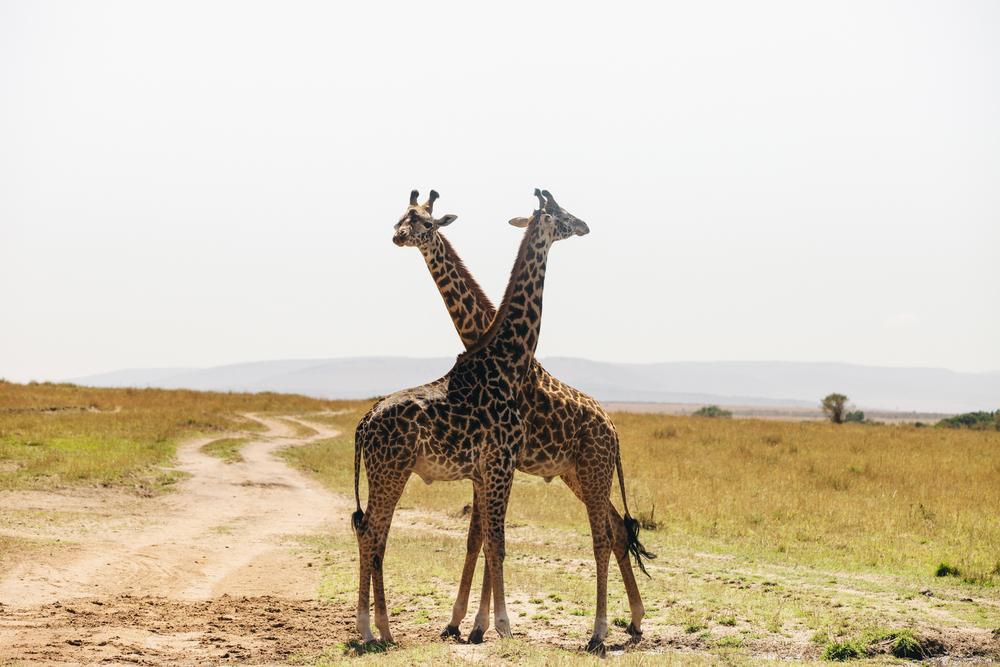 Kenya-102.jpg