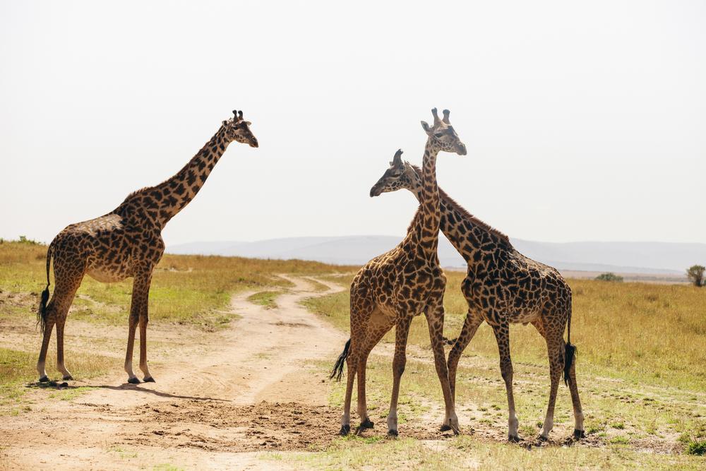 Kenya-103.jpg