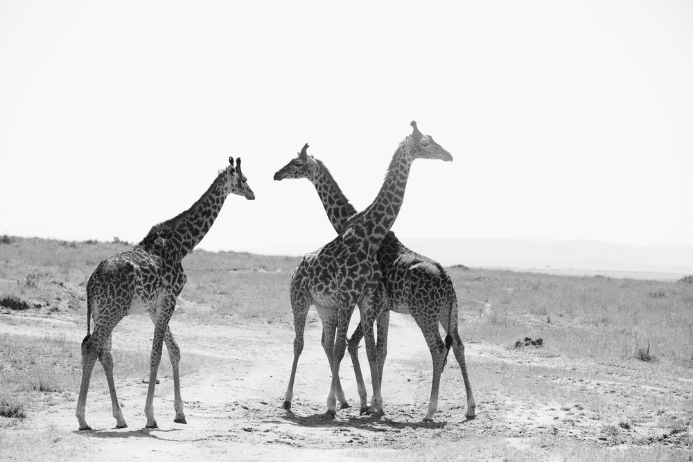 Kenya-106.jpg