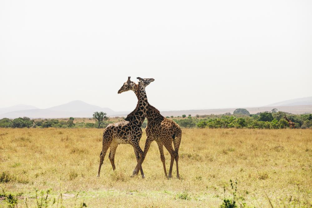 Kenya-108.jpg