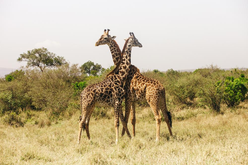 Kenya-109.jpg