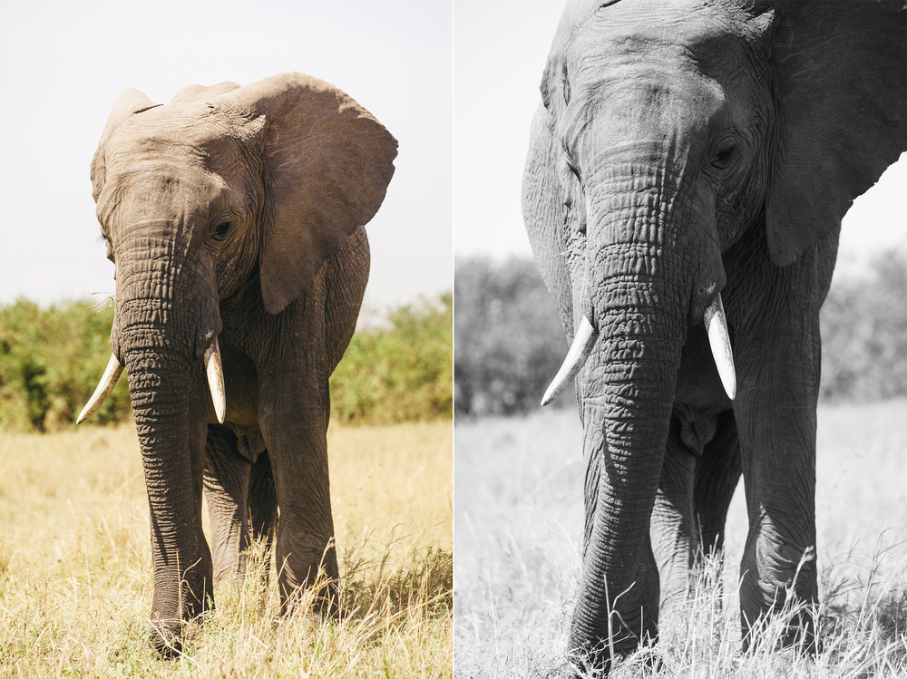 Kenya-116.jpg