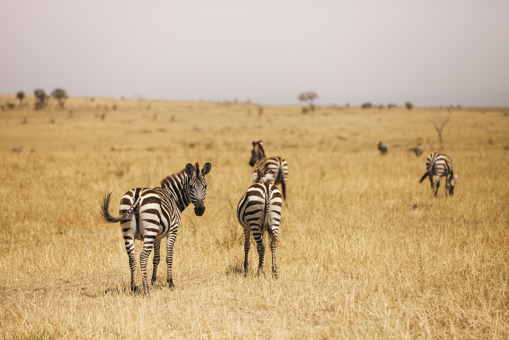 Kenya-118.jpg