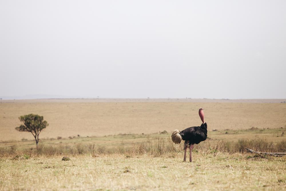 Kenya-122.jpg