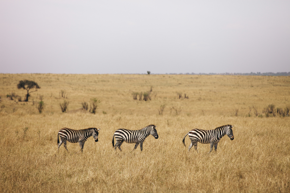 Kenya-121.jpg
