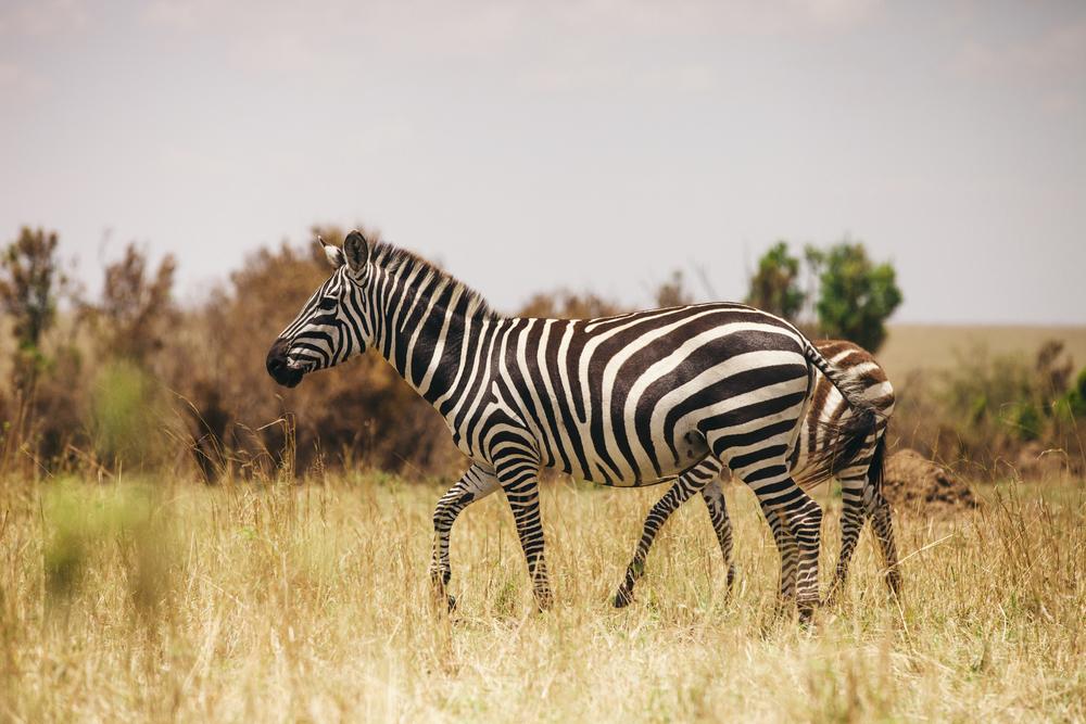 Kenya-135.jpg