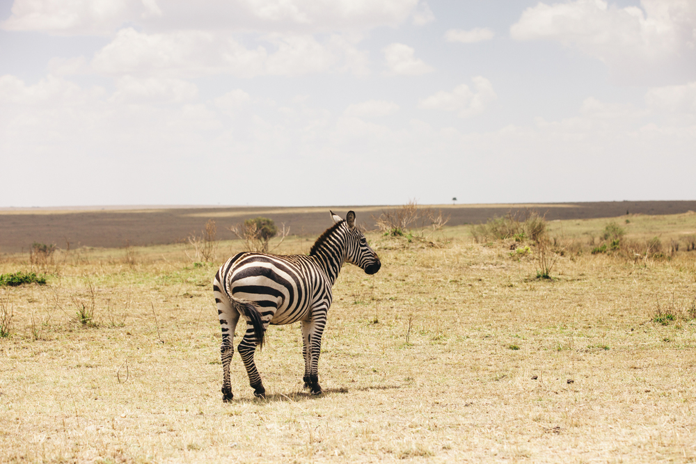 Kenya-136.jpg