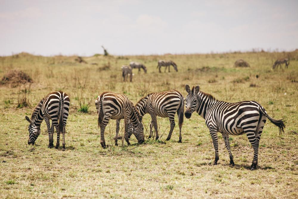 Kenya-137.jpg