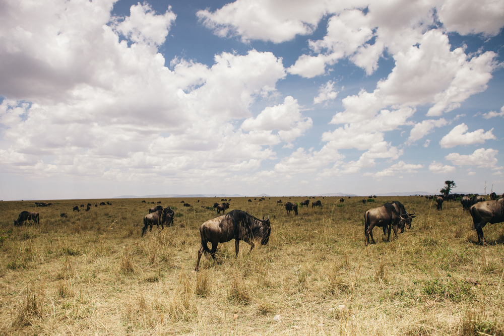 Kenya-142.jpg