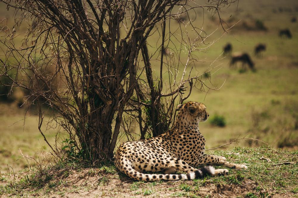 Kenya-144.jpg