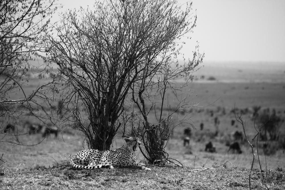 Kenya-147.jpg