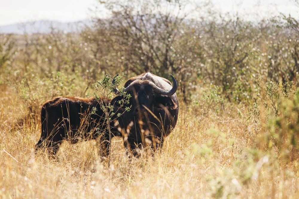 Kenya-163.jpg