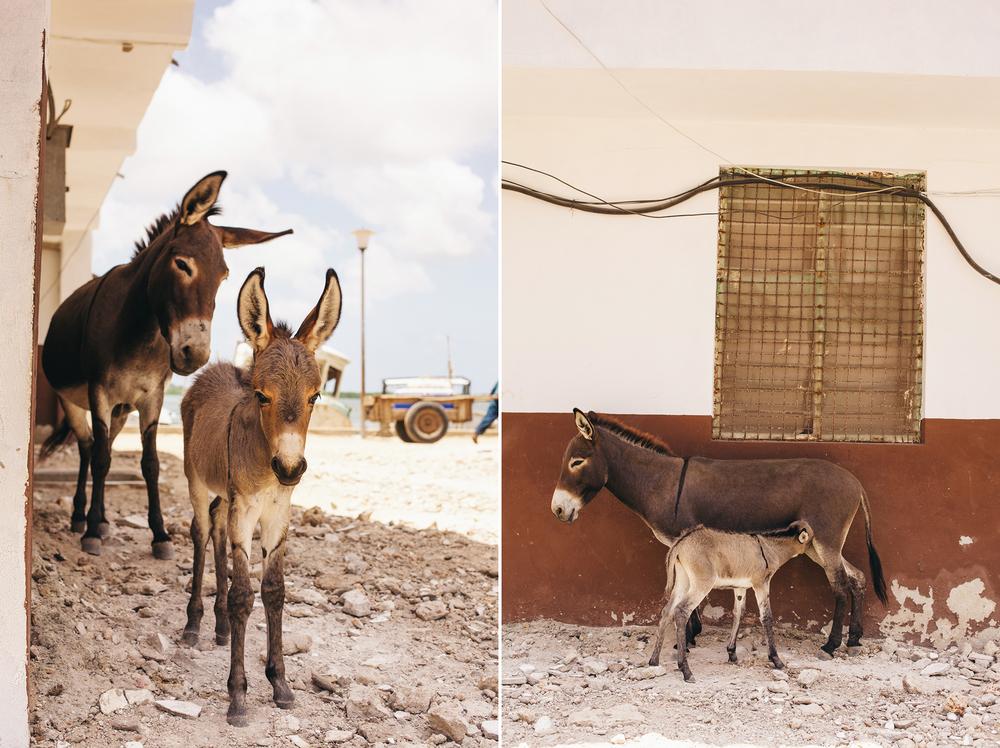 Kenya-242.jpg