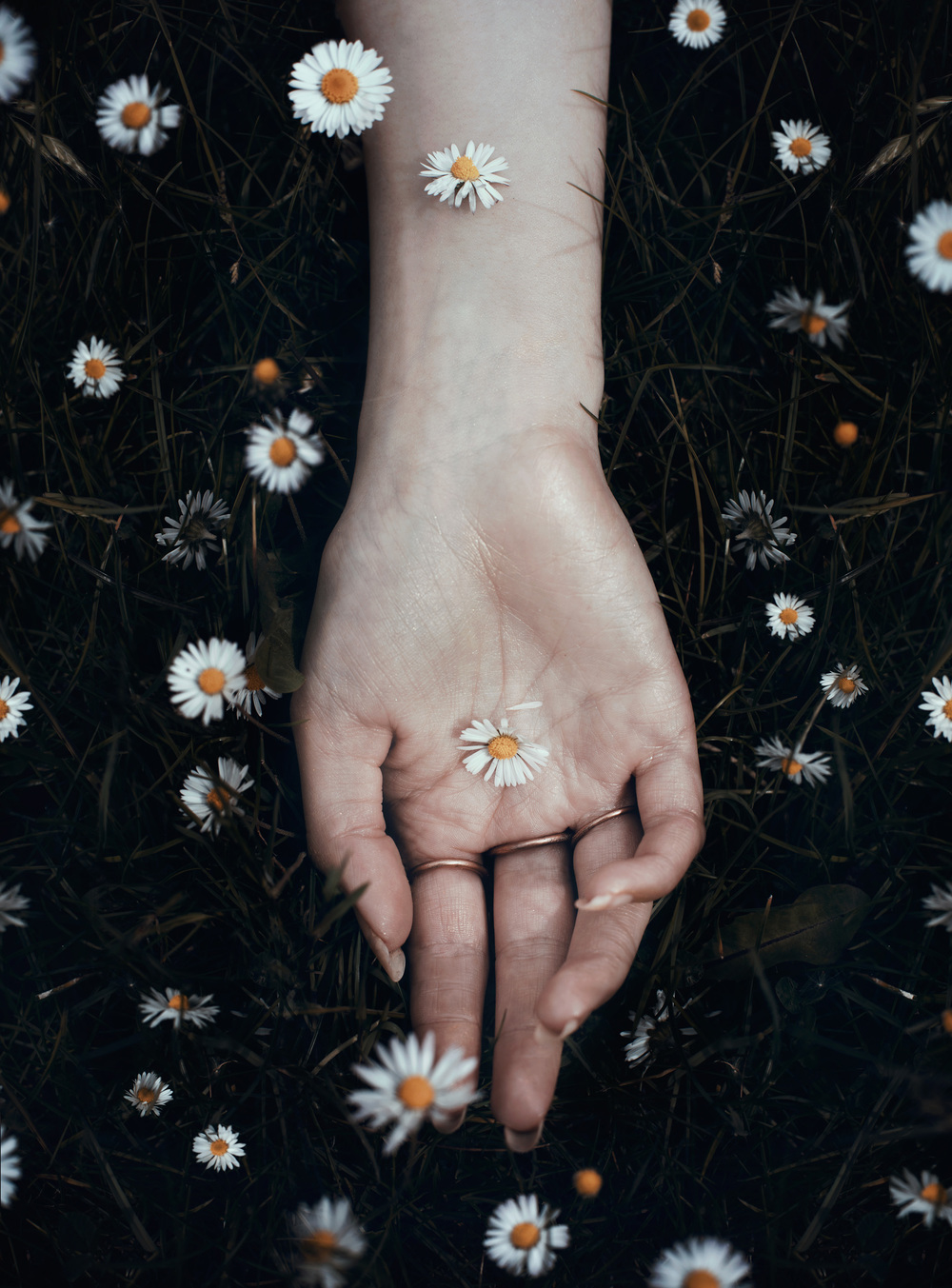 bella-kotak-spring-flowers-blossoms-daisies-daisy-hand-in-bloom-nature-season-fairytale-fantasy-fairytales-magic-magical-fantastical-fae-faerie-ethereal-white-flora-floral-delicate-portrait-fashion-ediorial-blossom-wild-fauna-photography-sml.jpg