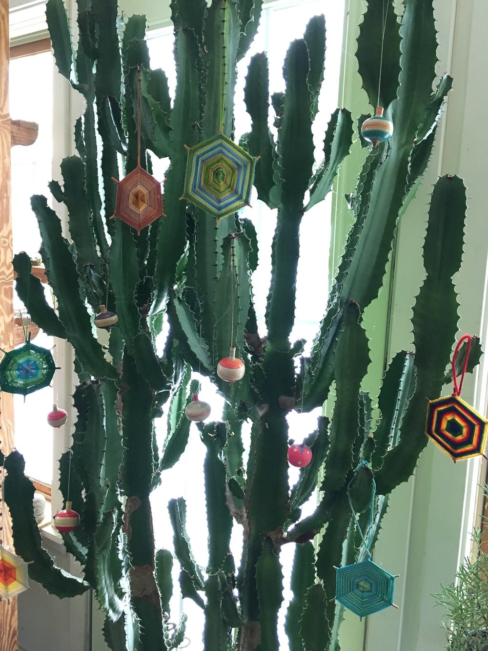 Christmas cactus decorated with eyes of God I made with my mother, and antique wooden tops