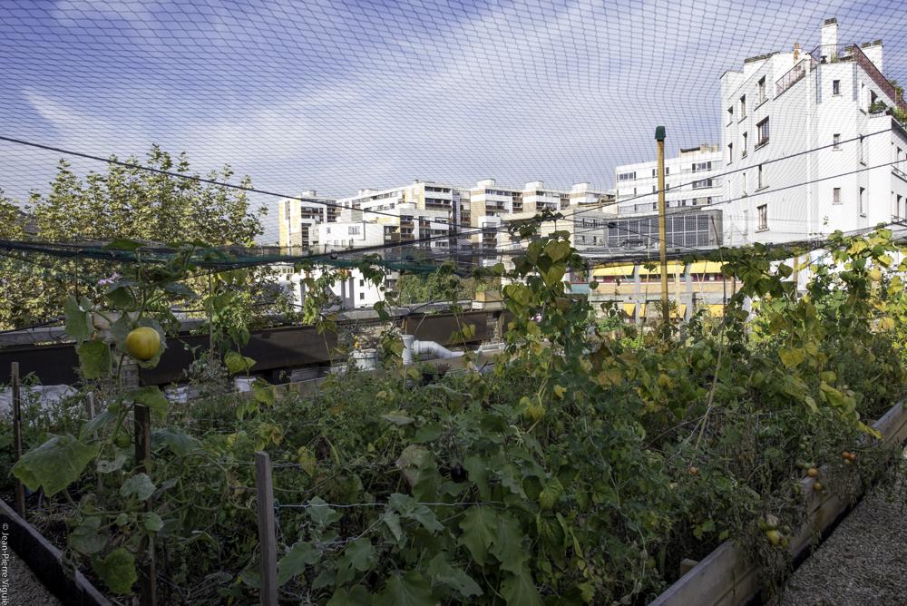 Potager organic sur le toit du collège Henri-Matisse dans le 20ème arrondissement porté par Sabine Lahoud.