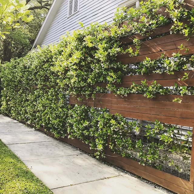 Sometimes you want a fence, sometimes you want a trellis.  Sometimes, you want BOTH.  The Jasmine is poppin this spring, too!  #elslastudio #landscapearchitecture #residentialdesign #moderndesign