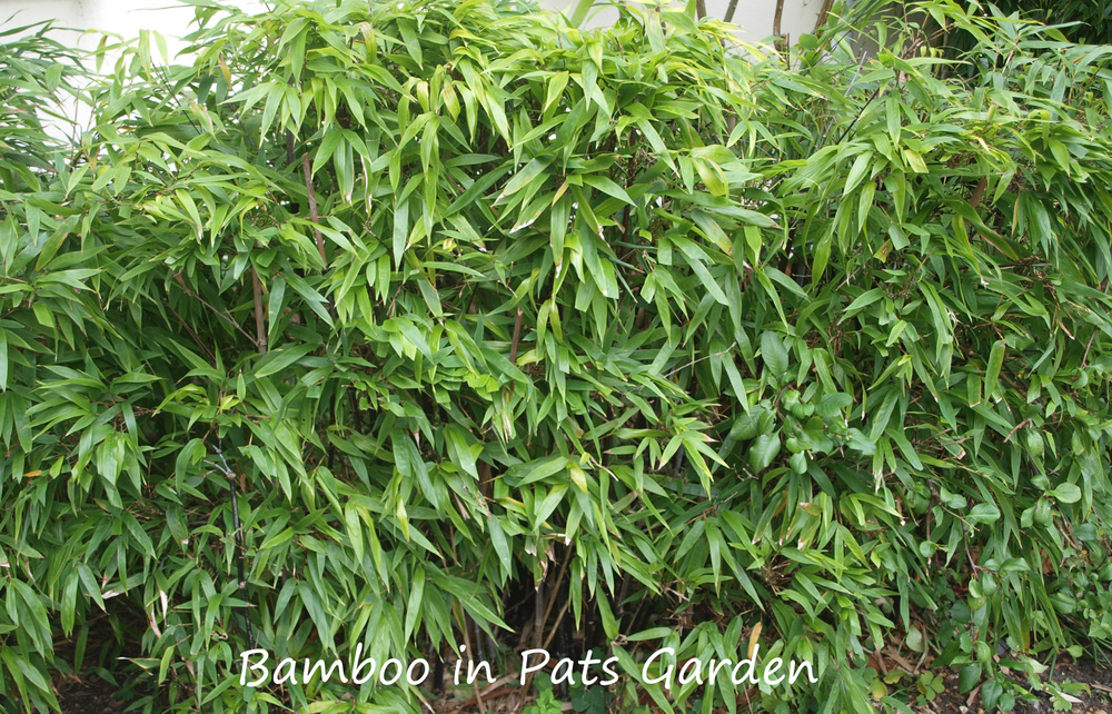Bamboo-text1.jpg