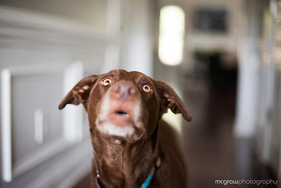 Eva's Dog Portraits