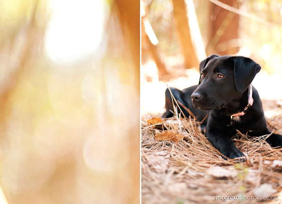 Sadie's Pet Portraits