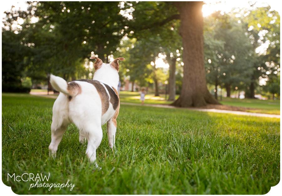 Charlotte Pet Photographer