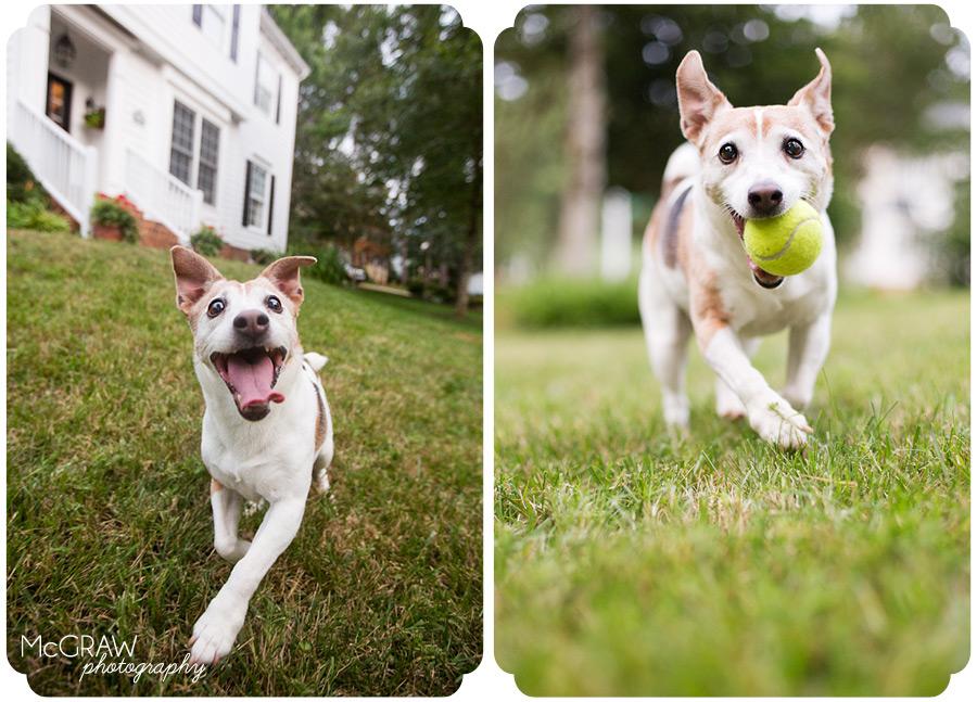 Charlotte Dog Photography