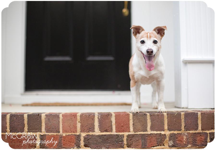 Durham Pet Photographer