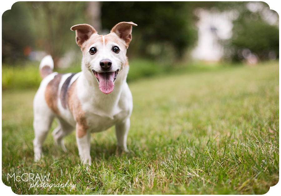 Chapel Hill Pet Photographer