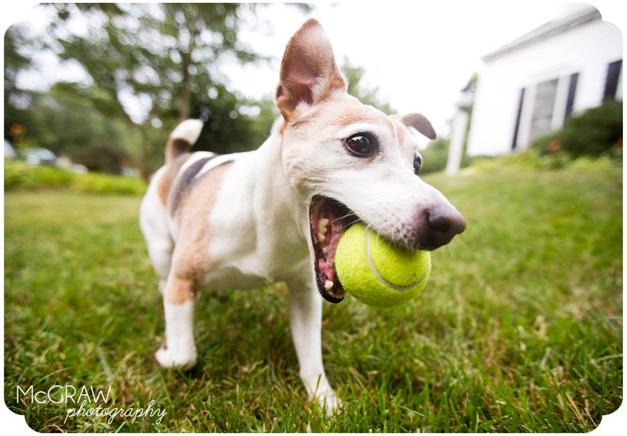 Chapel Hill Dog Photographer