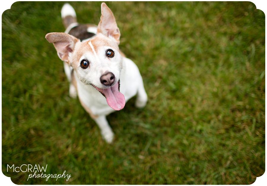 Durham Pet Photography