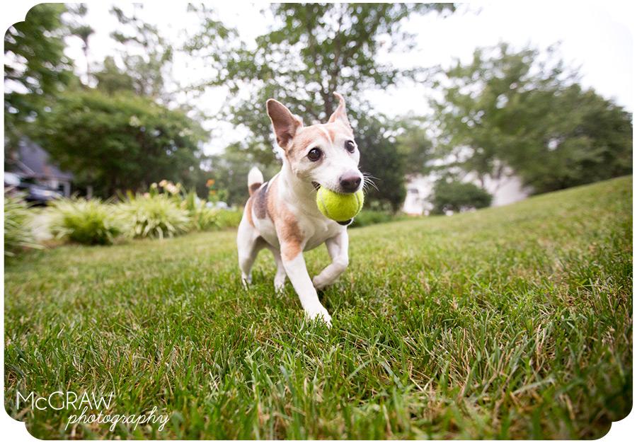 Durham Dog Photographer