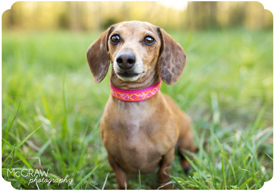 North Carolina Dog Photographer