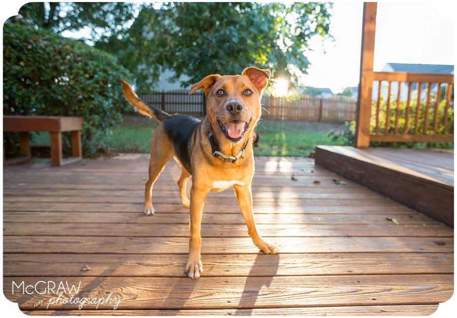 East Coast Dog Photos