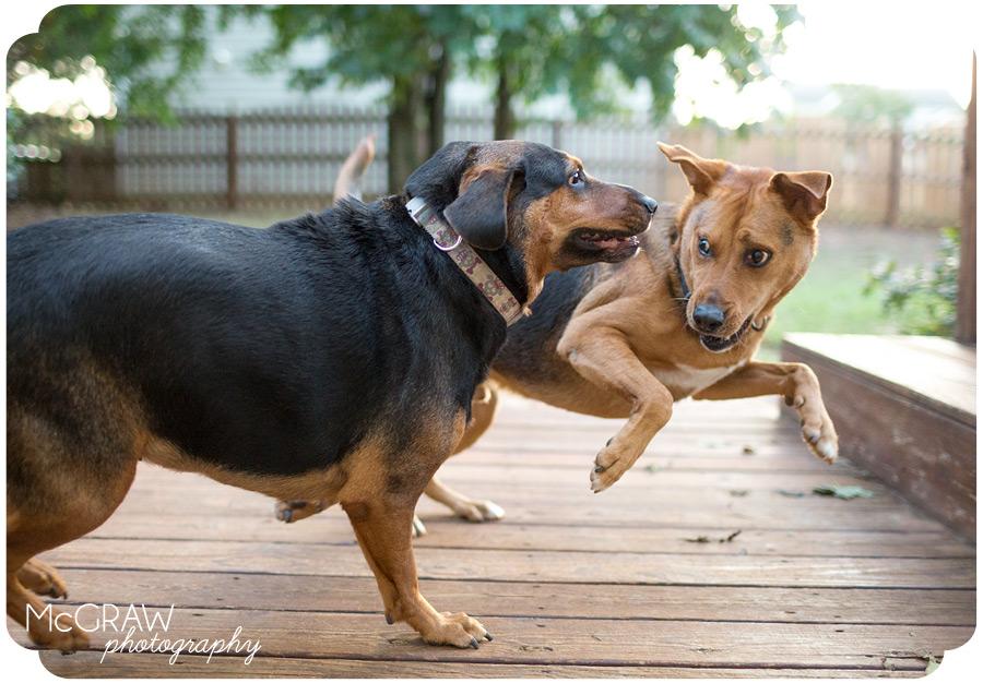 Dog Action Photographer