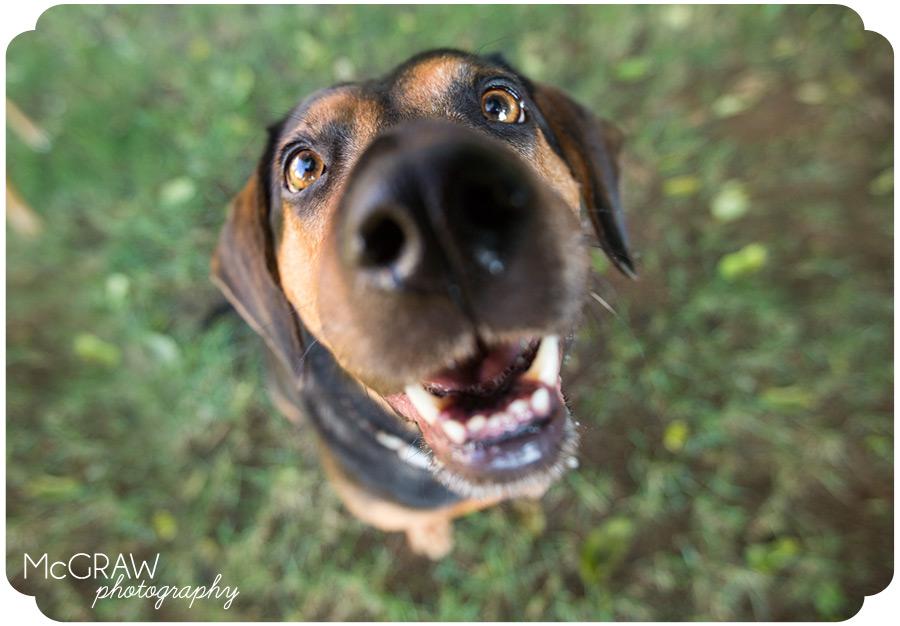 Charlotte NC Animal Photographer
