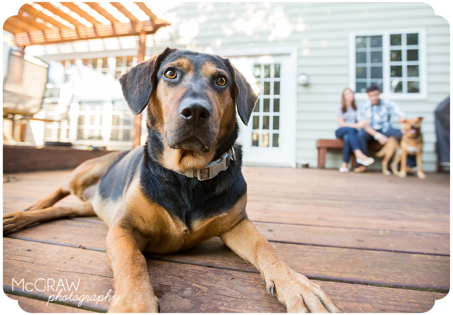 North Carolina Pet Photographer