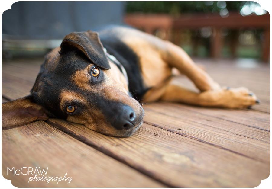 Charlotte area Pet Photographer