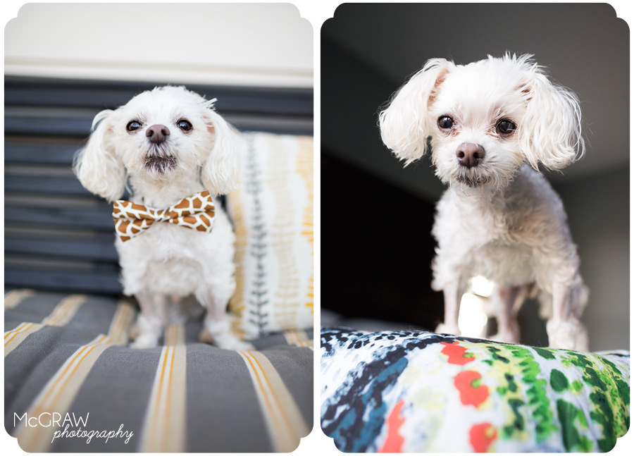 Mooresville NC Pet Photographer