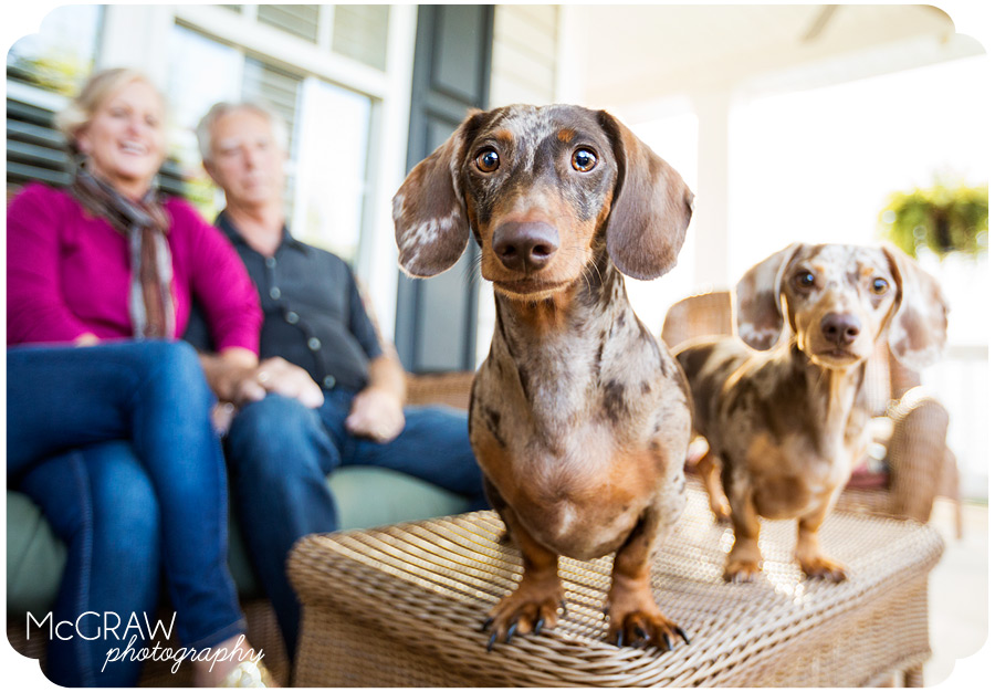 Lake Norman Pet Photographer