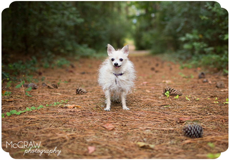 Modern pet photographer in Charlotte