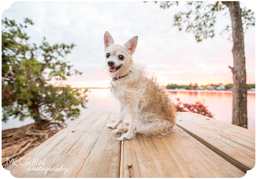 Dog photographer in the Carolinas