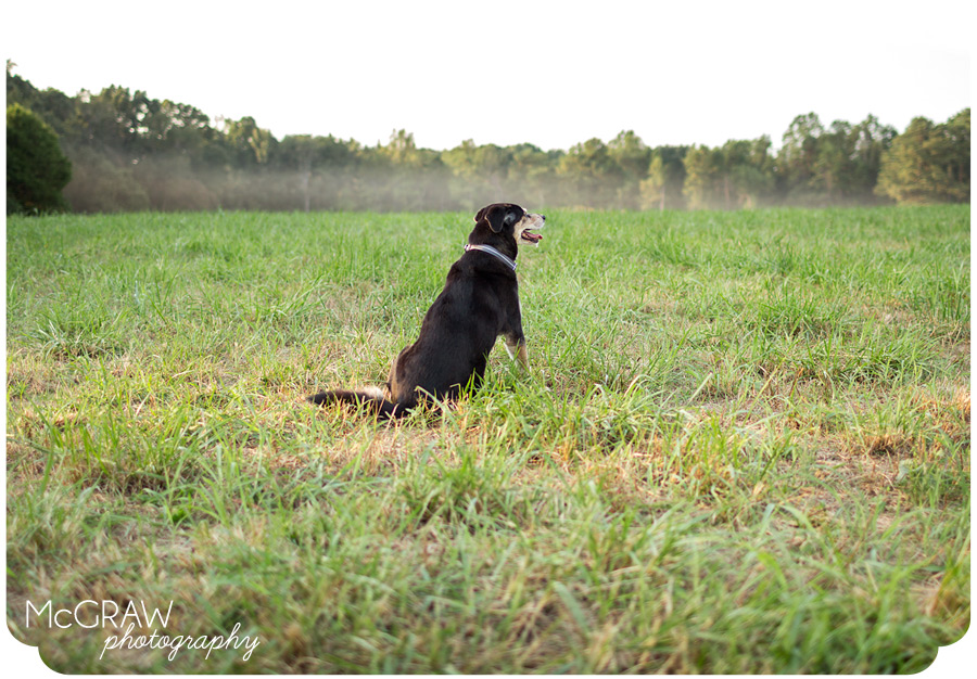 Southeast Dog Portraits