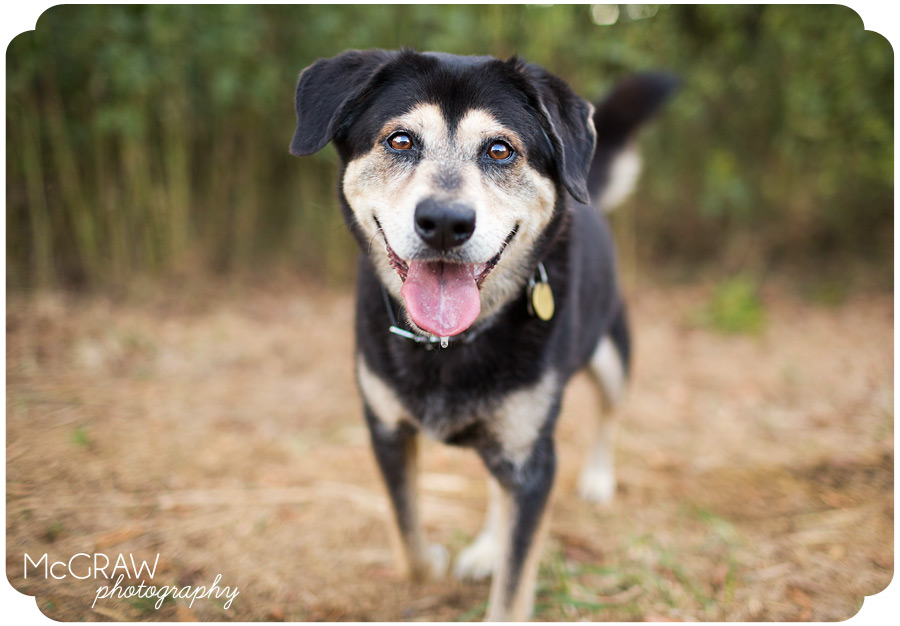 Charlotte Dog Photographer