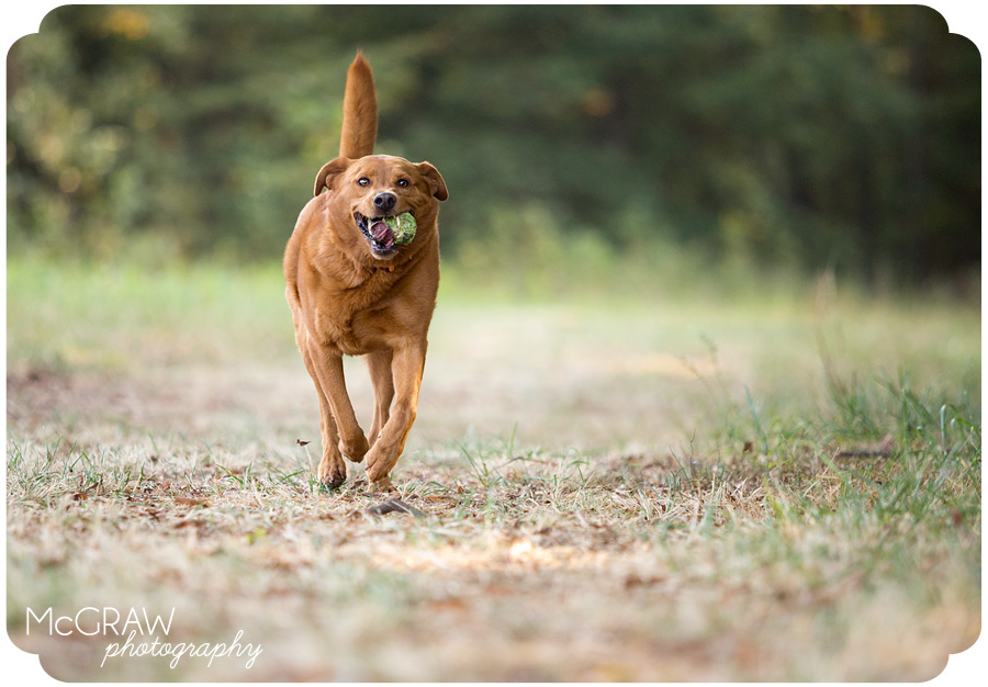 Charlotte Pet Photographer