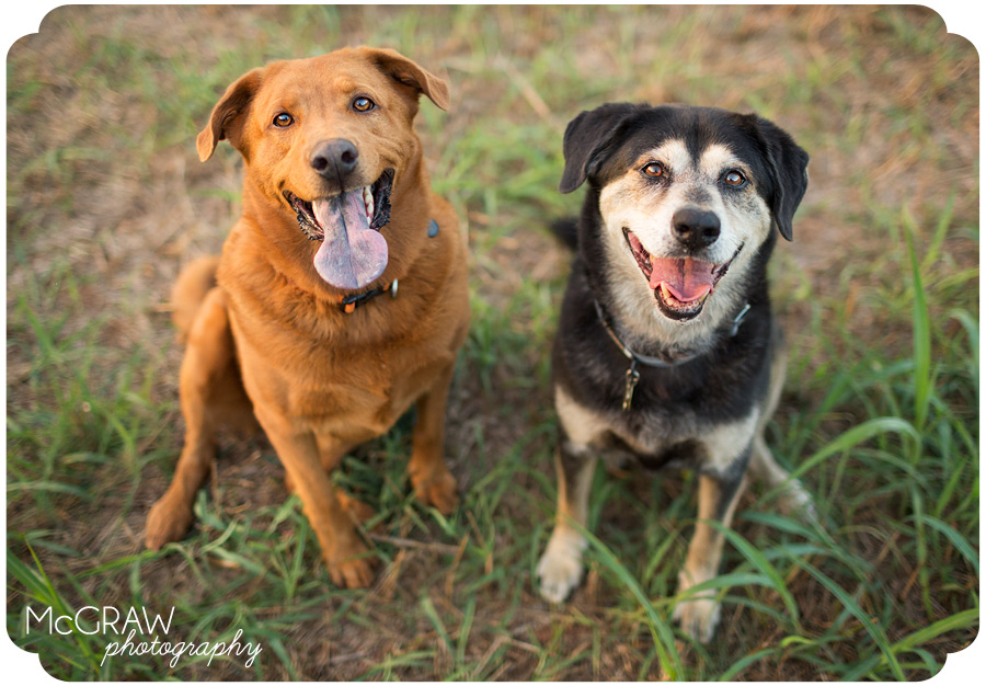 Charlotte NC Pet Portraits