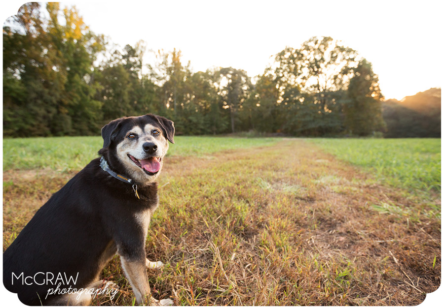 Carolina Modern Dog Photography