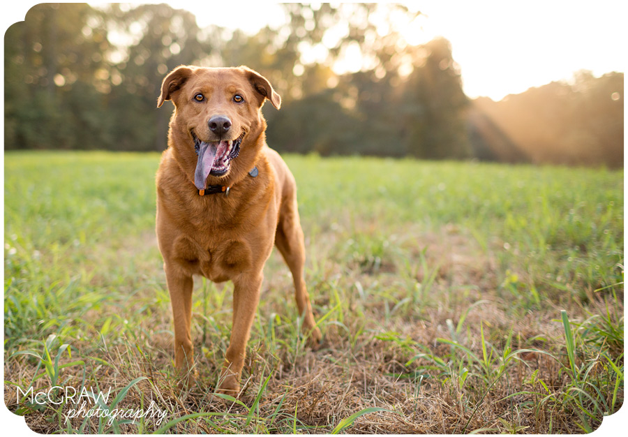 North Carolina Dog Photography