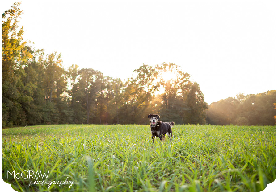 North Carolina Pet Photography