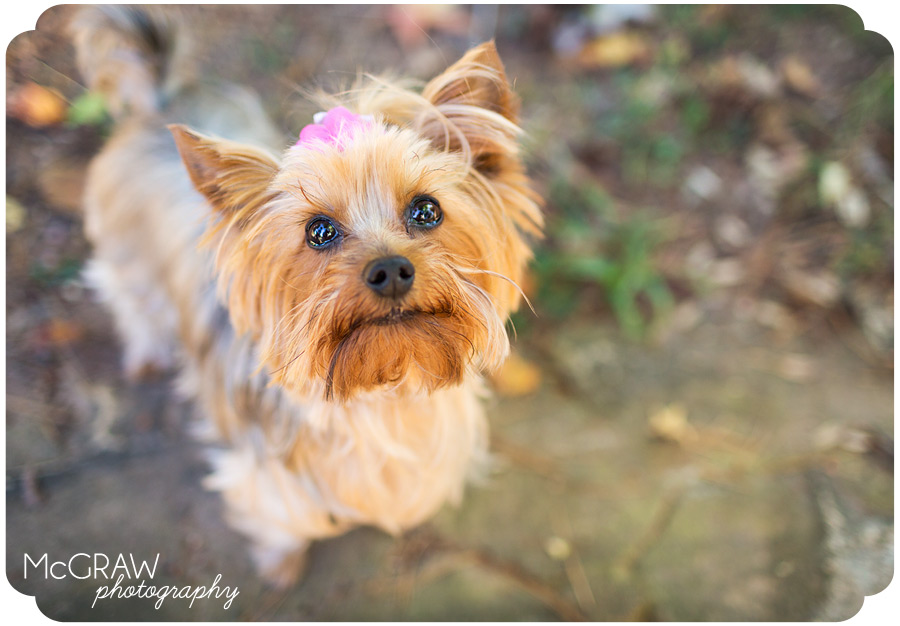 Pet Photographer in Charlotte