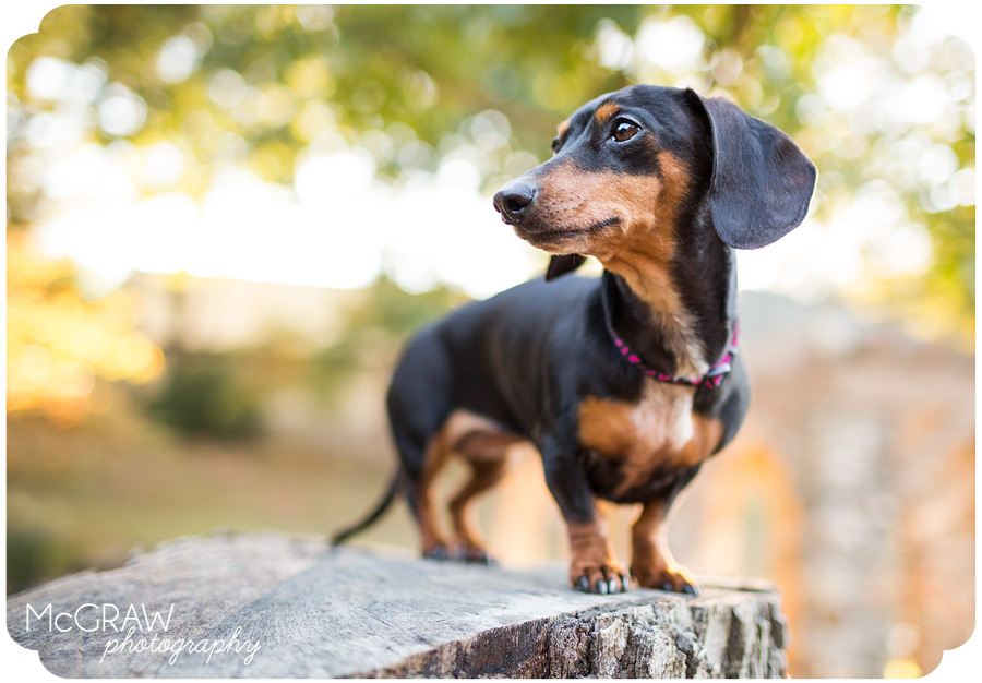 Pet Photography of the Carolinas